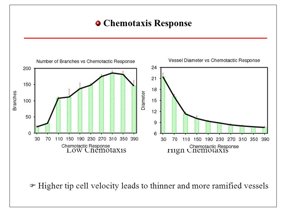 Chemotaxis Response Higher tip cell velocity leads to thinner and more ramified vessels. Low Chemotaxis.
