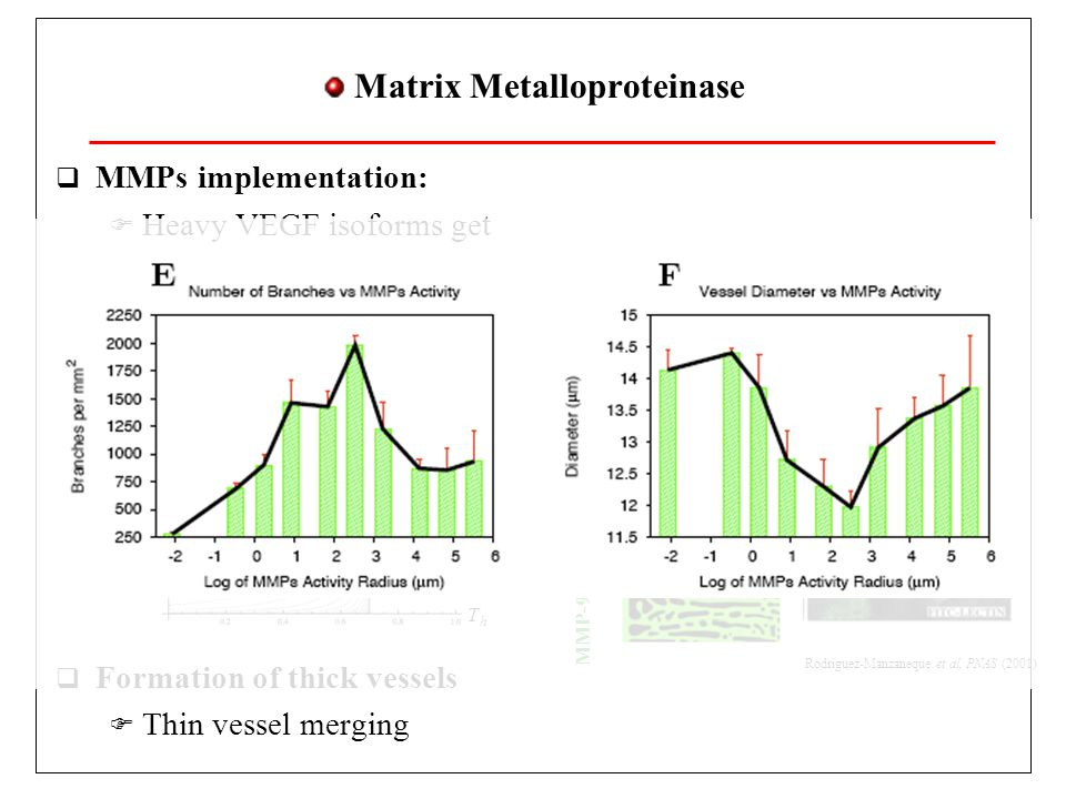 Matrix Metalloproteinase