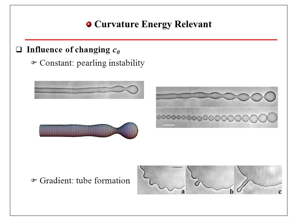 Curvature Energy Relevant