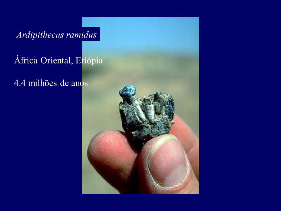 Ardipithecus ramidus África Oriental, Etiópia 4.4 milhões de anos