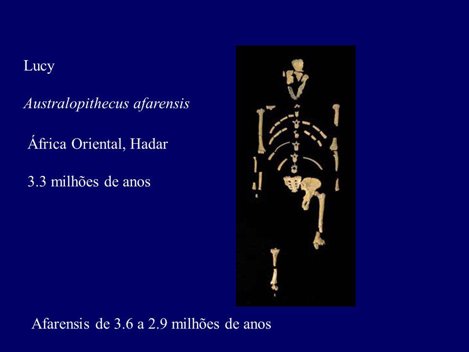 Lucy Australopithecus afarensis. África Oriental, Hadar.
