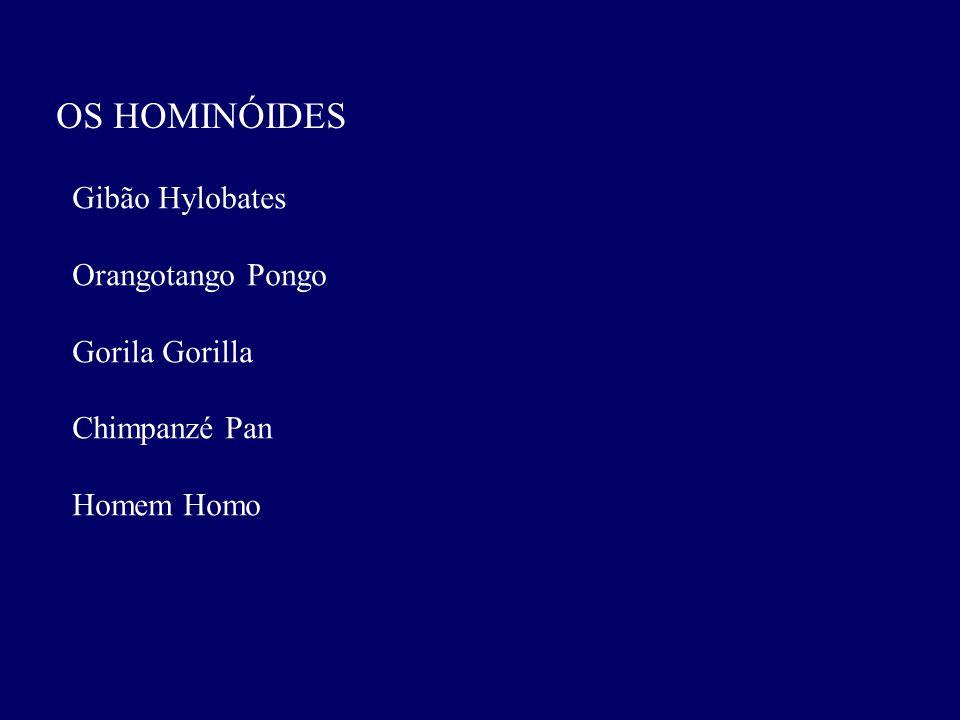 OS HOMINÓIDES Gibão Hylobates Orangotango Pongo Gorila Gorilla
