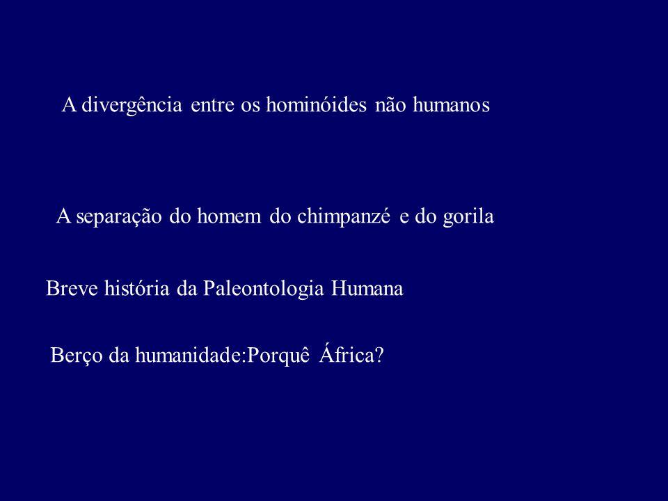 A divergência entre os hominóides não humanos