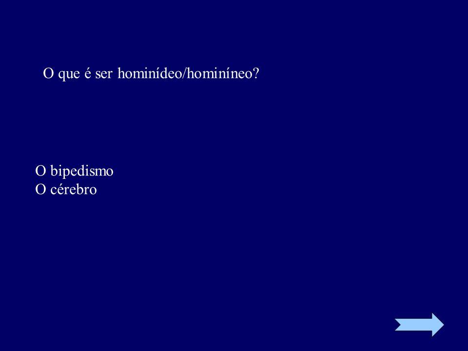 O que é ser hominídeo/hominíneo