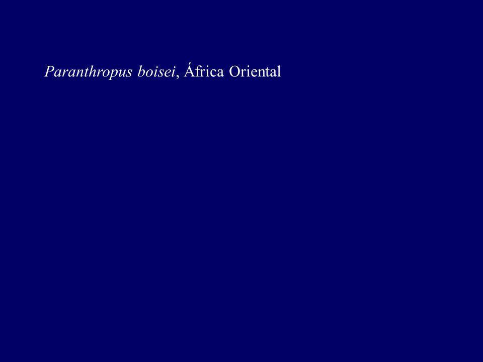 Paranthropus boisei, África Oriental