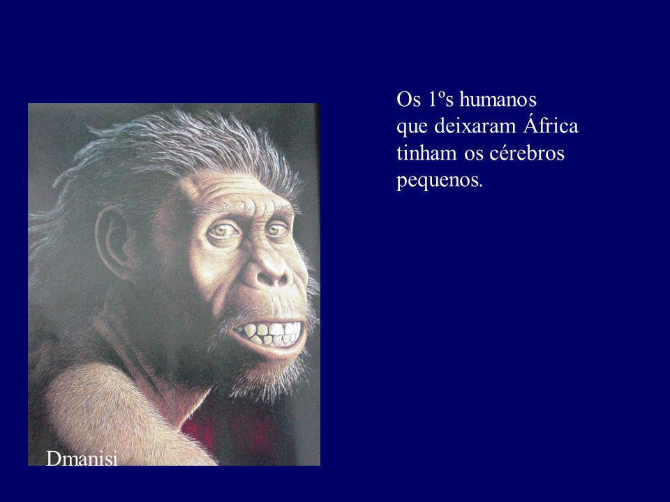 Os 1ºs humanos que deixaram África tinham os cérebros pequenos. Dmanisi