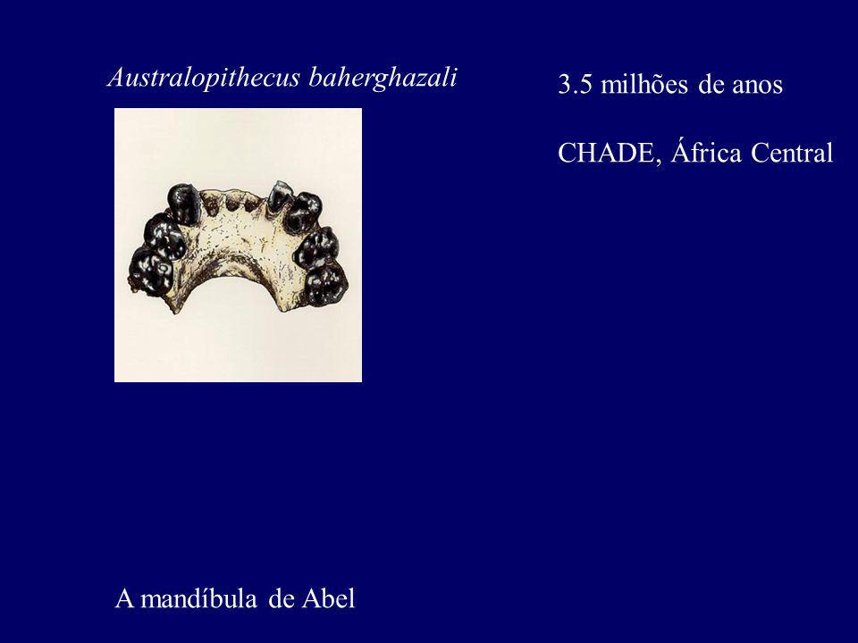 Australopithecus baherghazali