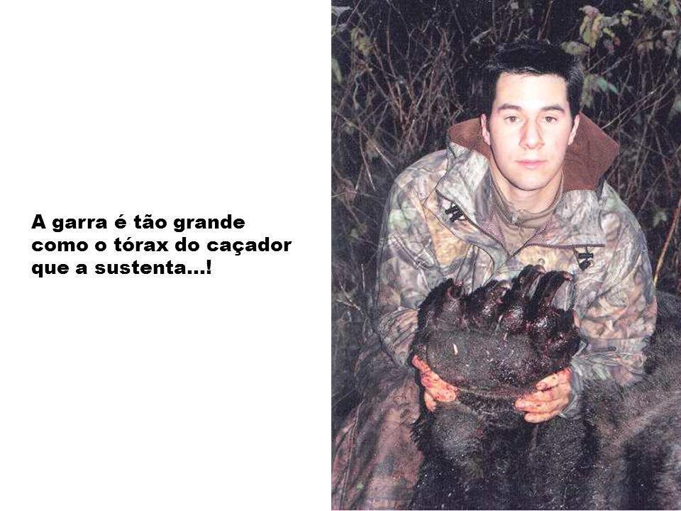 A garra é tão grande como o tórax do caçador que a sustenta…!
