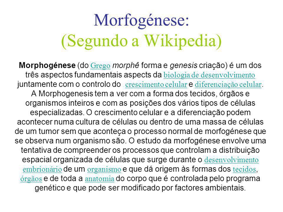 Morfogénese: (Segundo a Wikipedia)