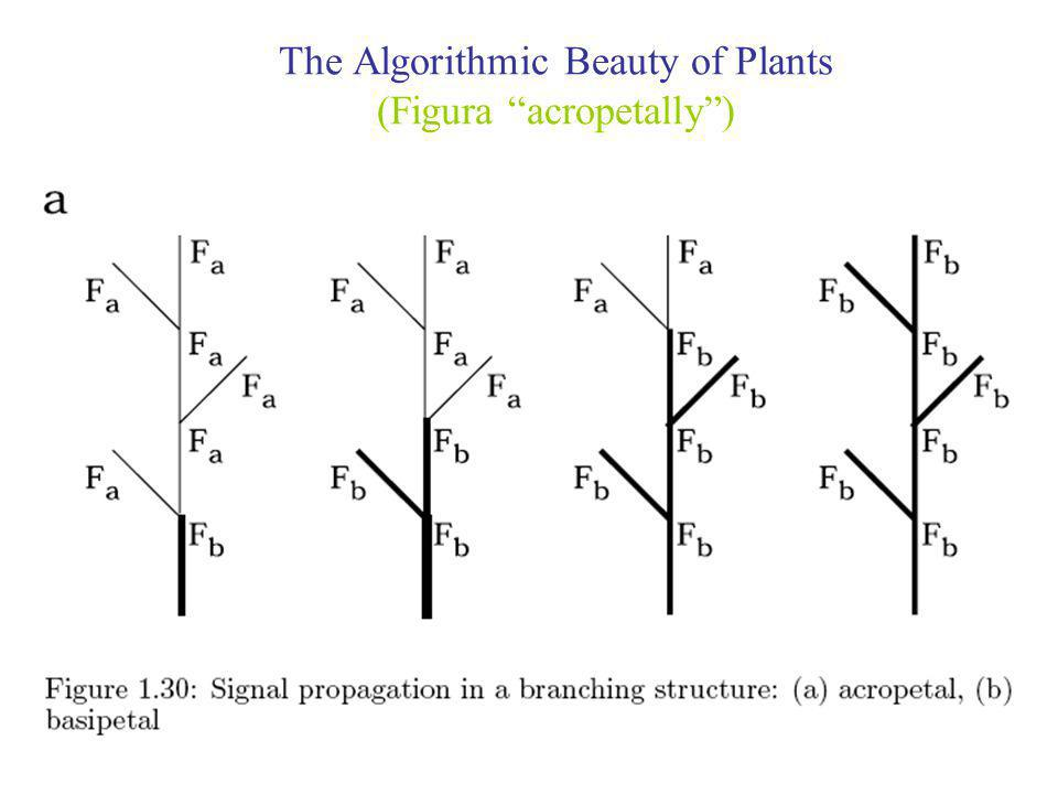 The Algorithmic Beauty of Plants (Figura acropetally )