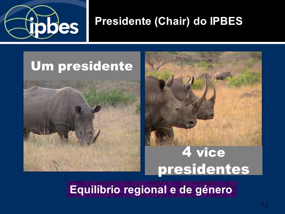 Presidente (Chair) do IPBES