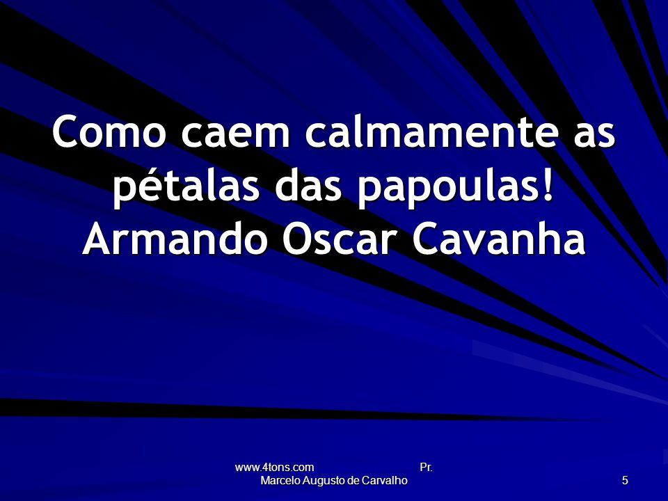 Como caem calmamente as pétalas das papoulas! Armando Oscar Cavanha