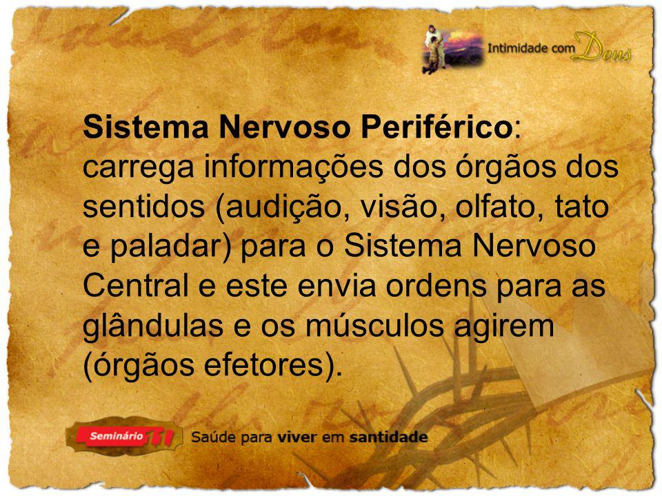 Sistema Nervoso Periférico: carrega informações dos órgãos dos sentidos (audição, visão, olfato, tato e paladar) para o Sistema Nervoso Central e este envia ordens para as glândulas e os músculos agirem (órgãos efetores).