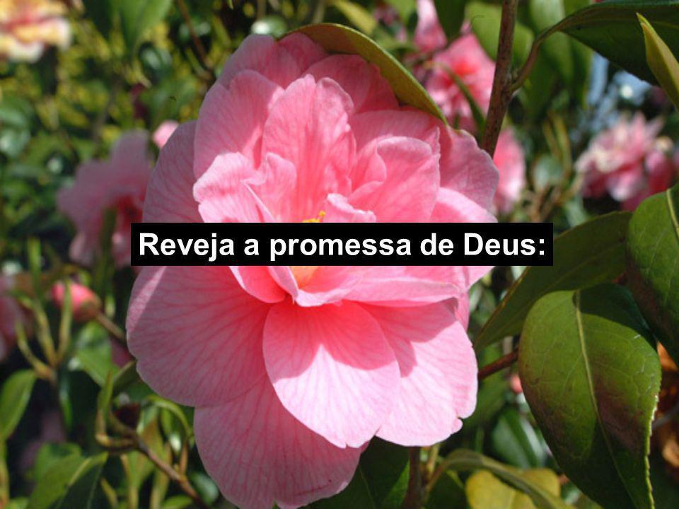 Reveja a promessa de Deus: