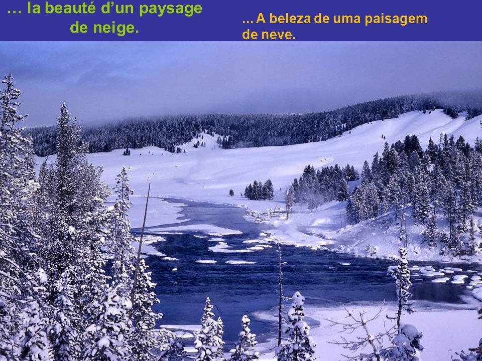 … la beauté d'un paysage de neige.