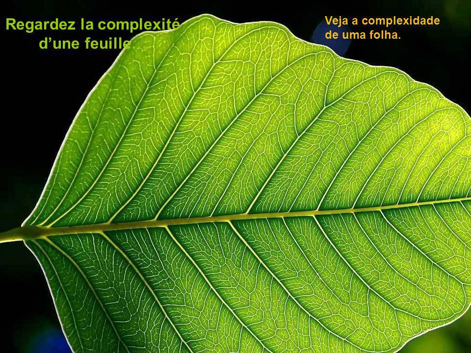 Regardez la complexité d'une feuille…