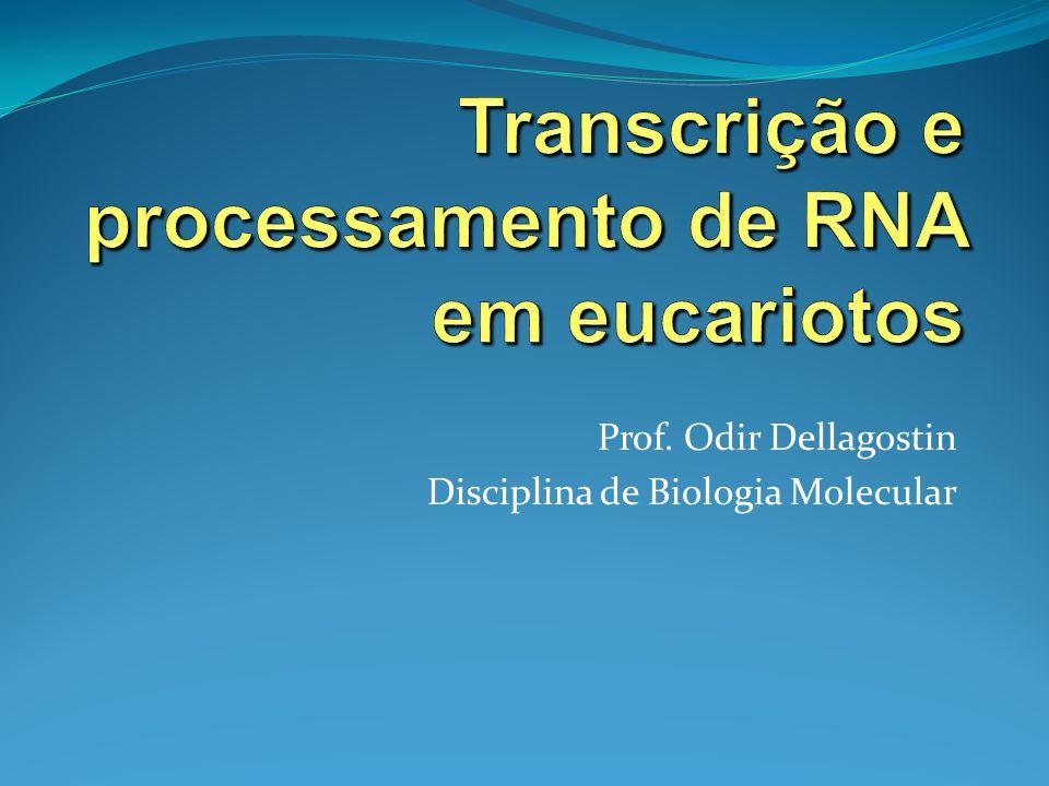 Transcrição e processamento de RNA em eucariotos
