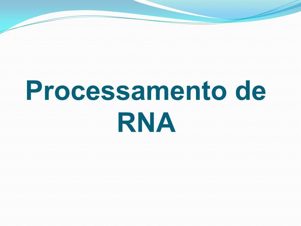 Processamento de RNA