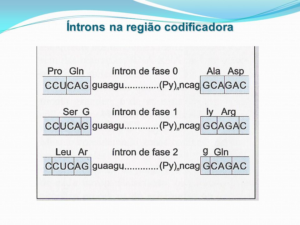 Íntrons na região codificadora