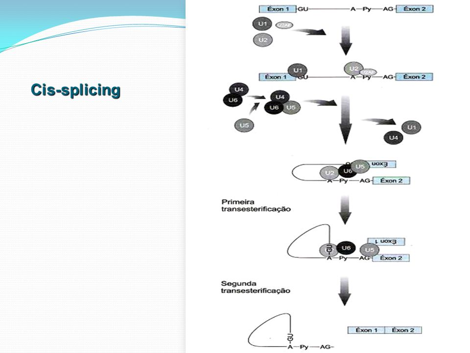 Cis-splicing