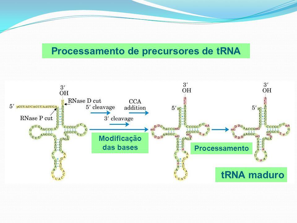 Processamento de precursores de tRNA