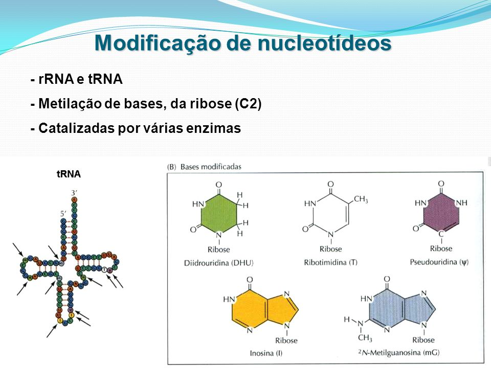 Modificação de nucleotídeos