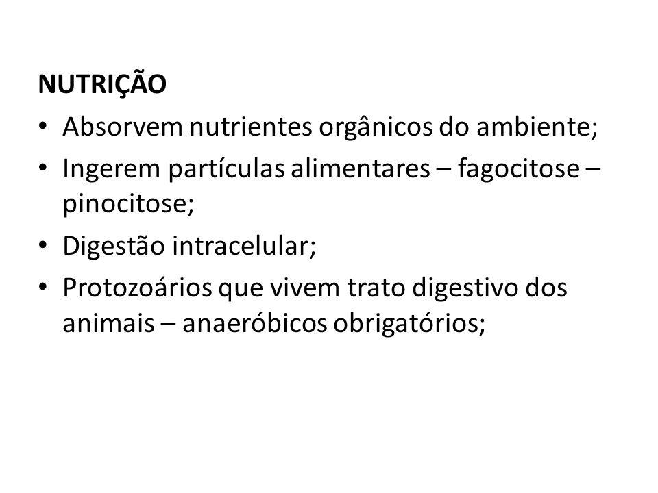 NUTRIÇÃO Absorvem nutrientes orgânicos do ambiente; Ingerem partículas alimentares – fagocitose – pinocitose;