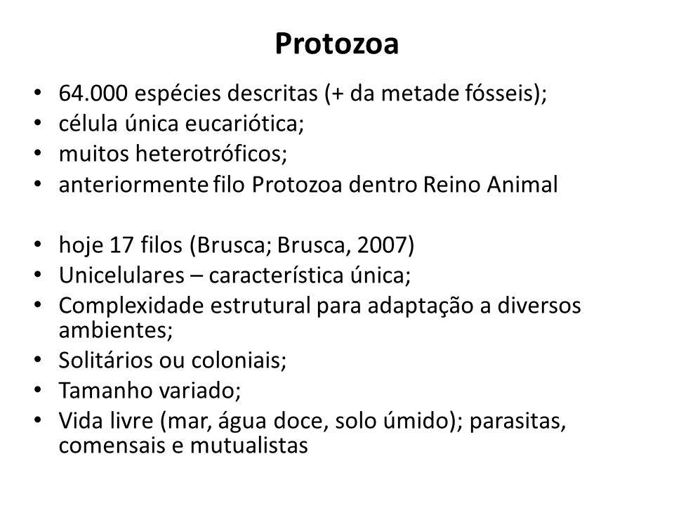 Protozoa 64.000 espécies descritas (+ da metade fósseis);