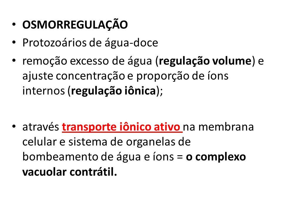 OSMORREGULAÇÃO Protozoários de água-doce.