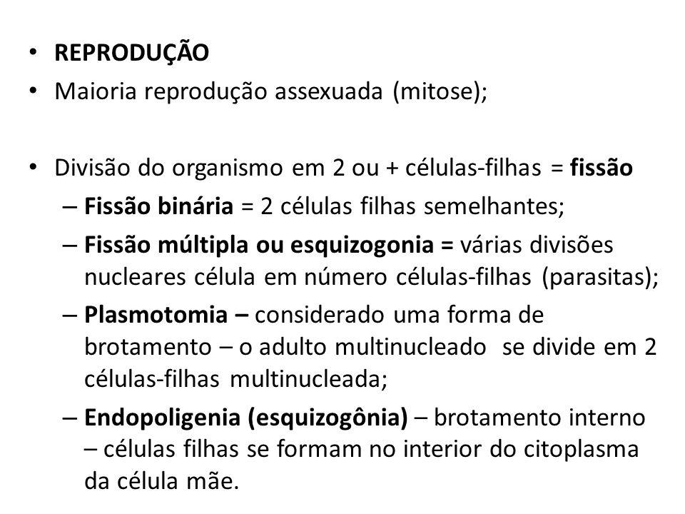 REPRODUÇÃO Maioria reprodução assexuada (mitose); Divisão do organismo em 2 ou + células-filhas = fissão.