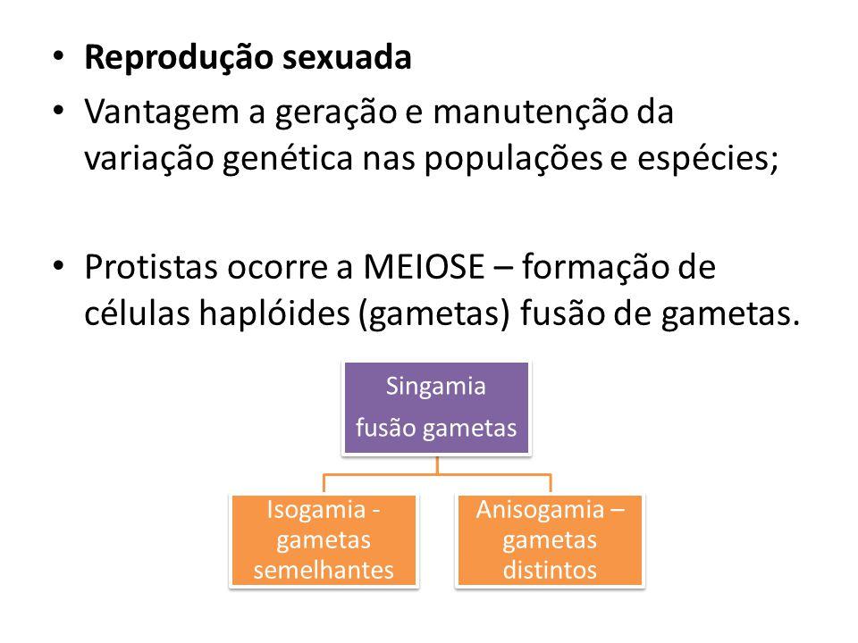 Reprodução sexuada Vantagem a geração e manutenção da variação genética nas populações e espécies;