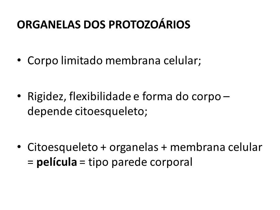 ORGANELAS DOS PROTOZOÁRIOS