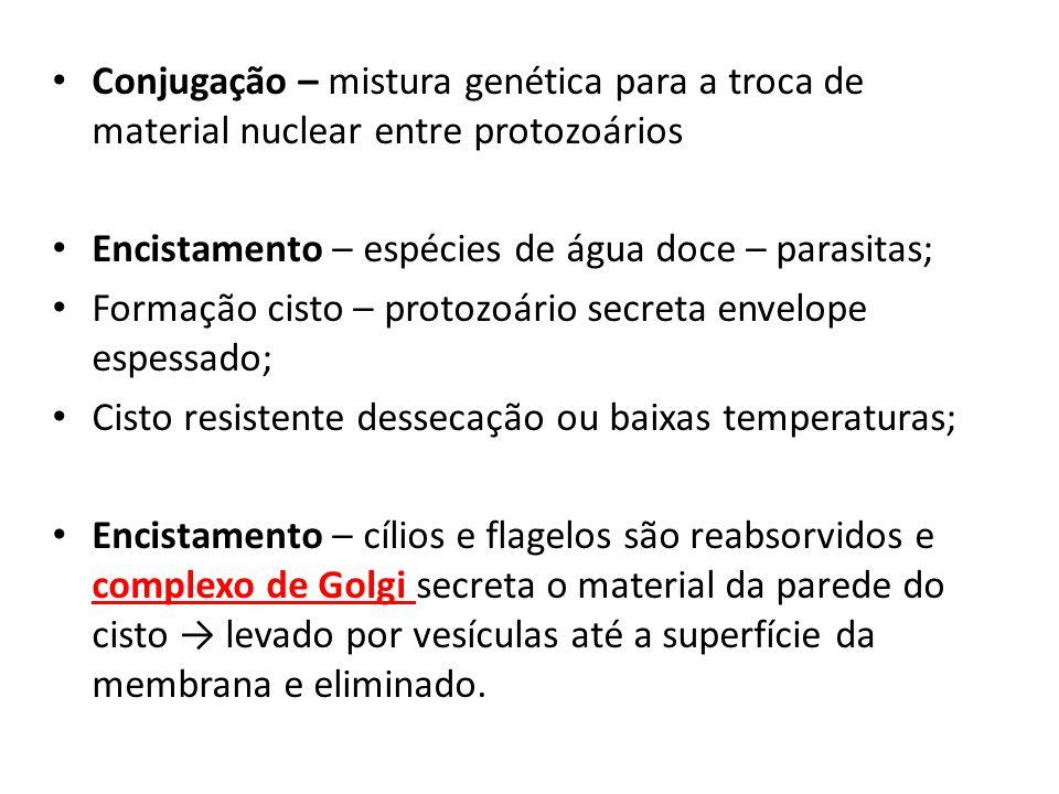 Conjugação – mistura genética para a troca de material nuclear entre protozoários