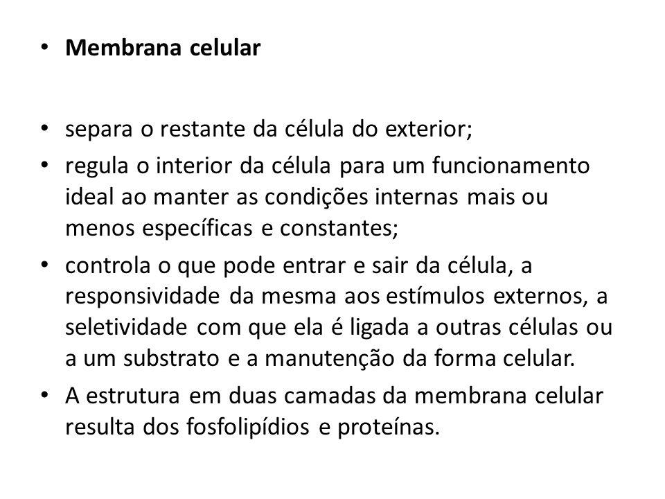Membrana celular separa o restante da célula do exterior;