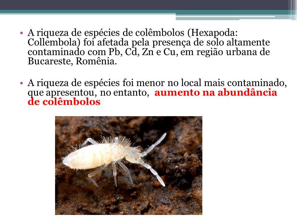 A riqueza de espécies de colêmbolos (Hexapoda: Collembola) foi afetada pela presença de solo altamente contaminado com Pb, Cd, Zn e Cu, em região urbana de Bucareste, Romênia.
