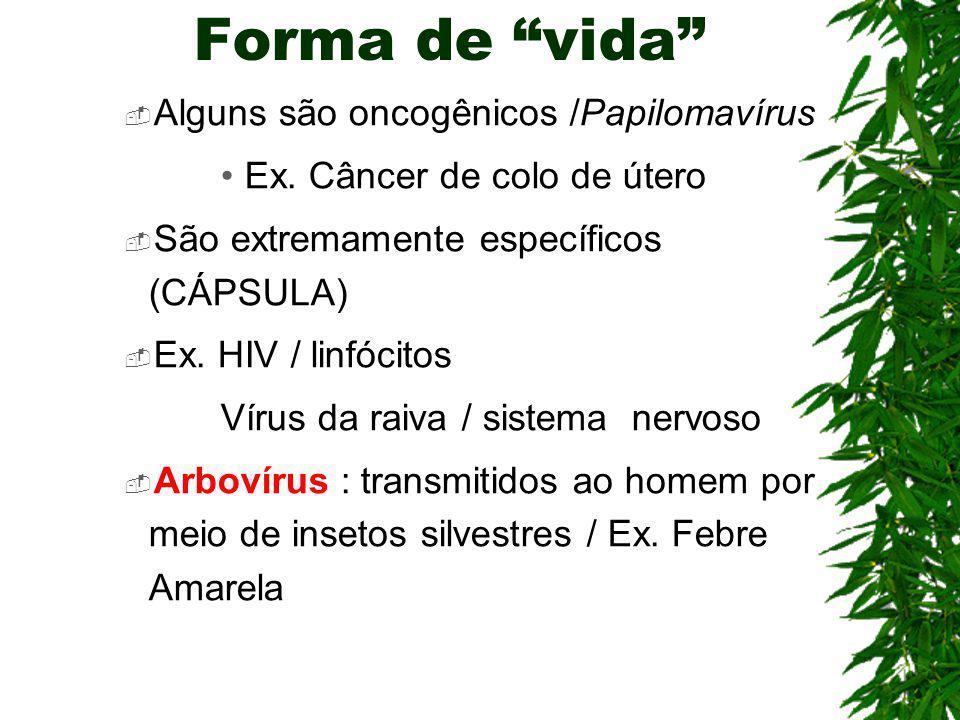Forma de vida Alguns são oncogênicos /Papilomavírus