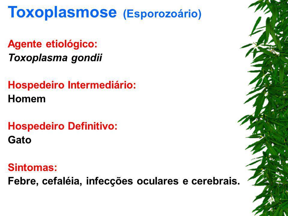 Toxoplasmose (Esporozoário)