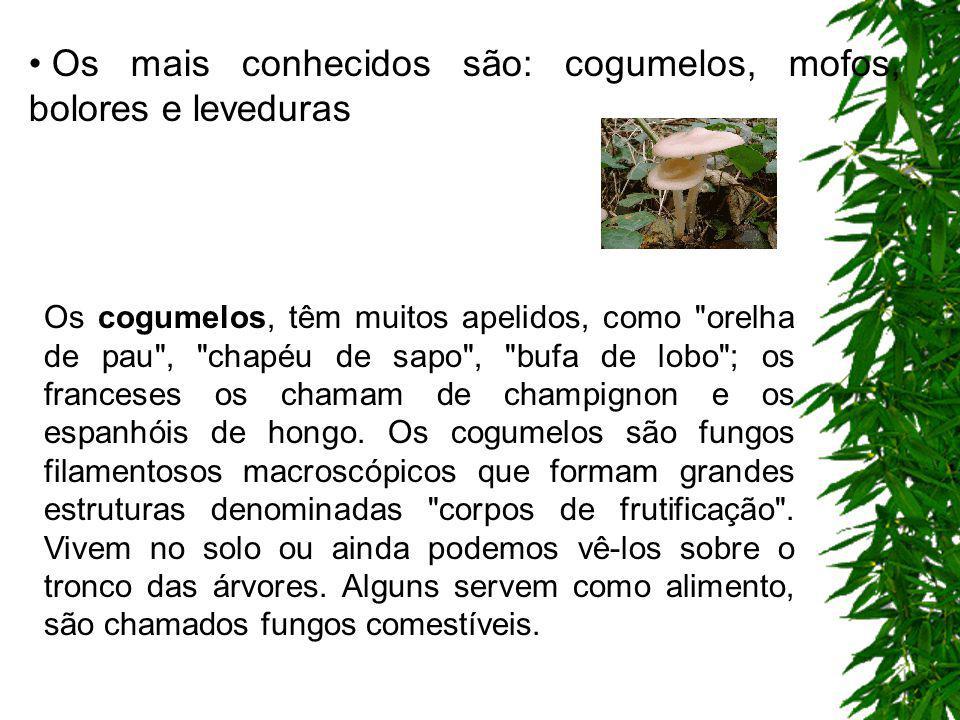 Os mais conhecidos são: cogumelos, mofos, bolores e leveduras