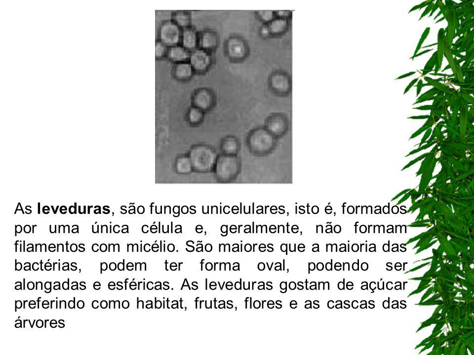 As leveduras, são fungos unicelulares, isto é, formados por uma única célula e, geralmente, não formam filamentos com micélio.