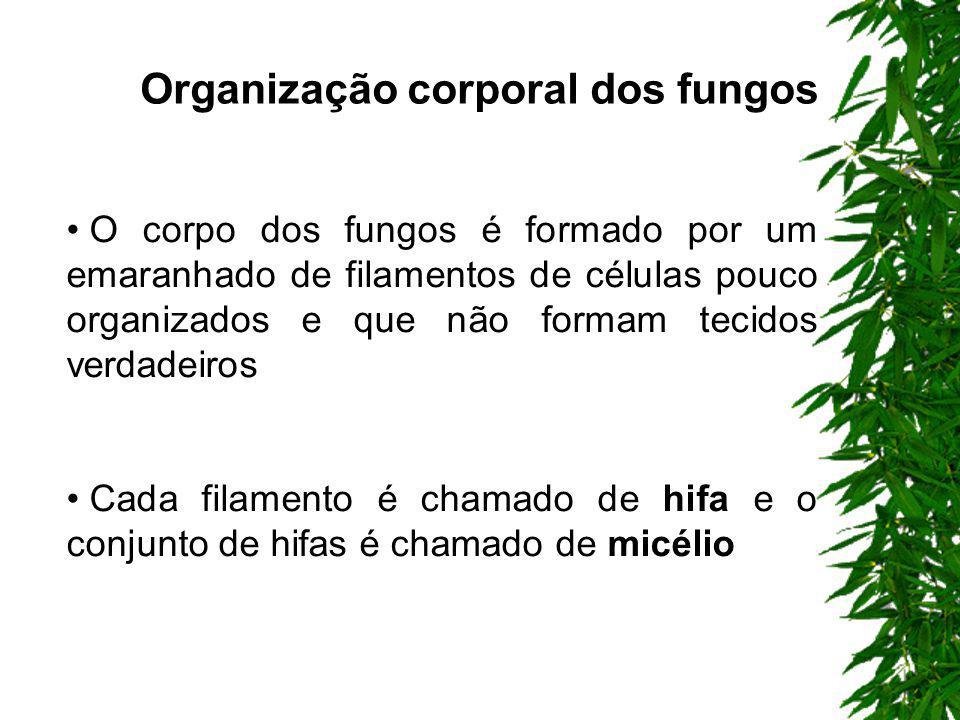 Organização corporal dos fungos