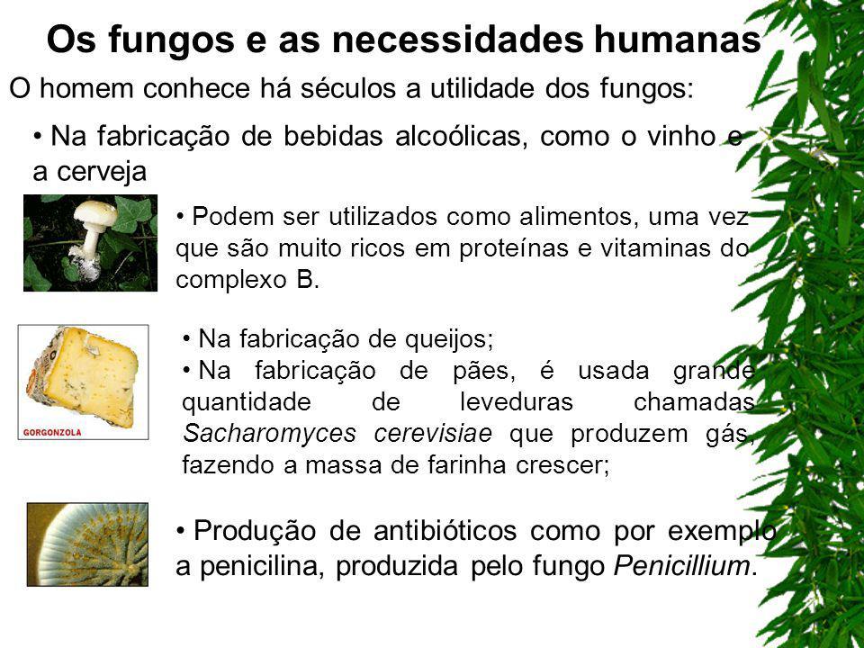 Os fungos e as necessidades humanas