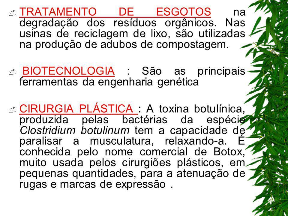 TRATAMENTO DE ESGOTOS na degradação dos resíduos orgânicos