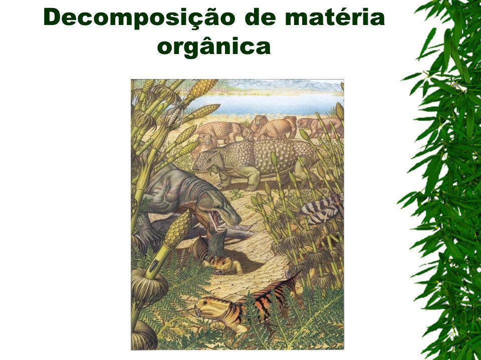 Decomposição de matéria orgânica