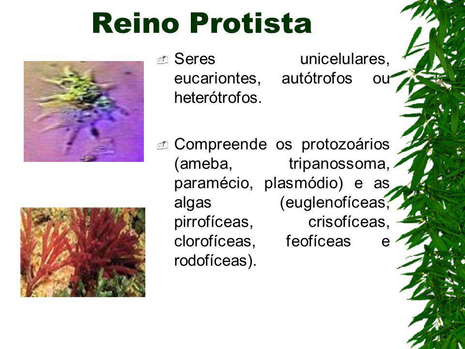 Reino Protista Seres unicelulares, eucariontes, autótrofos ou heterótrofos.