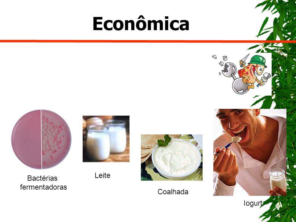 Econômica Bactérias fermentadoras Iogurt Leite Coalhada