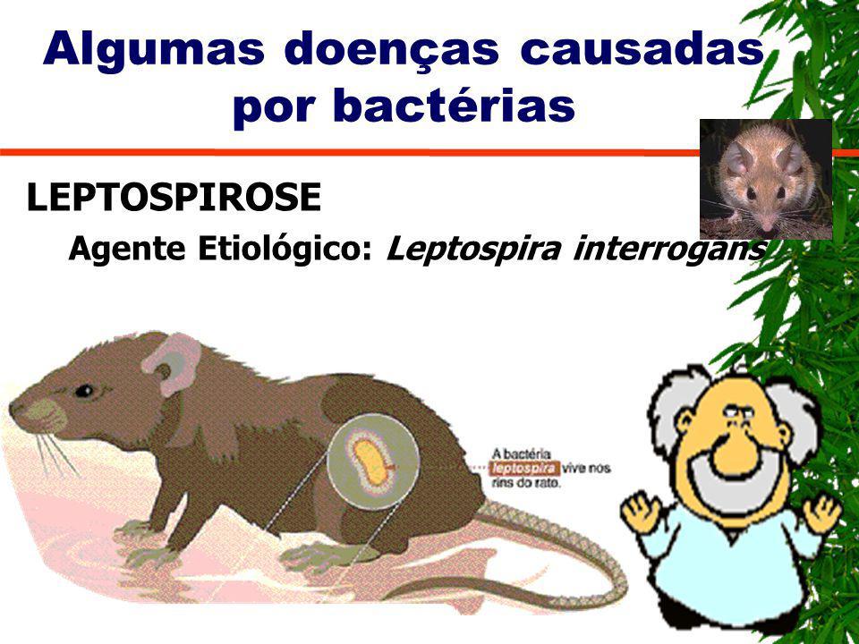 Algumas doenças causadas por bactérias