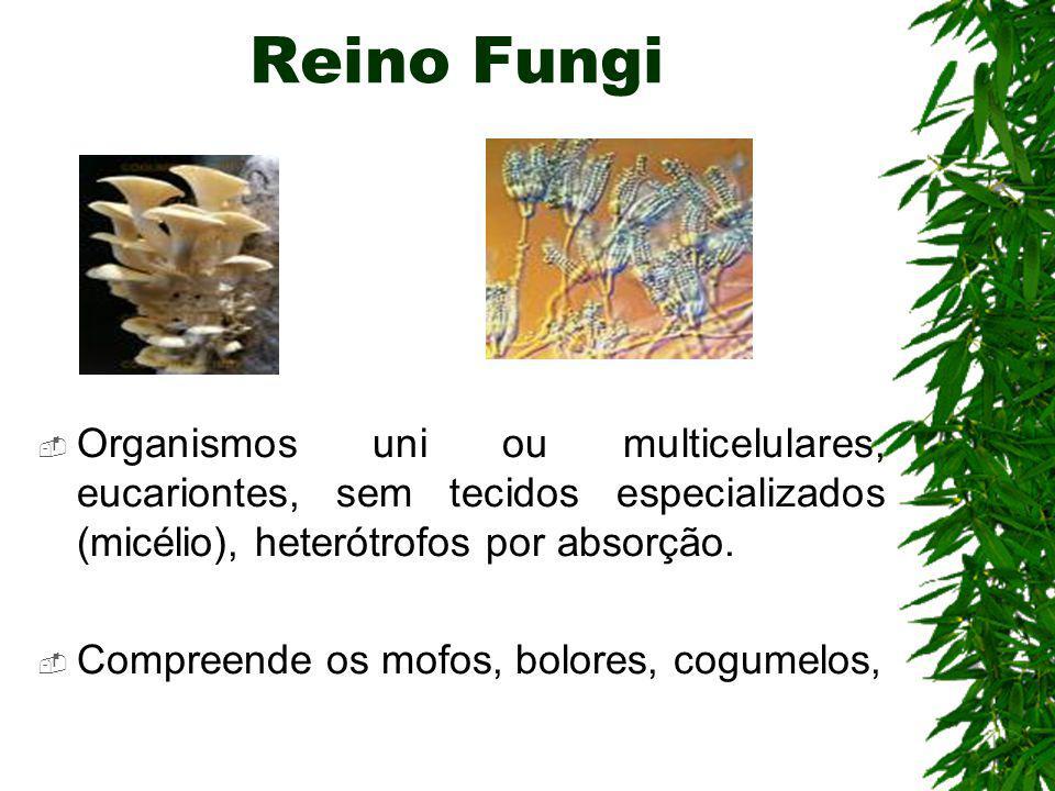 Reino Fungi Organismos uni ou multicelulares, eucariontes, sem tecidos especializados (micélio), heterótrofos por absorção.
