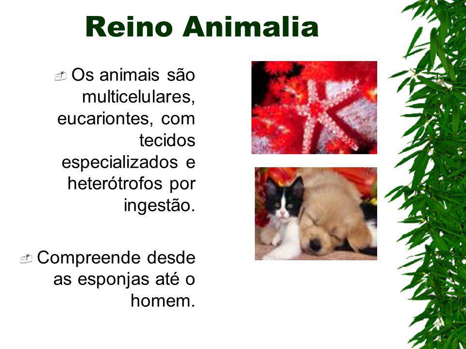 Reino Animalia Os animais são multicelulares, eucariontes, com tecidos especializados e heterótrofos por ingestão.
