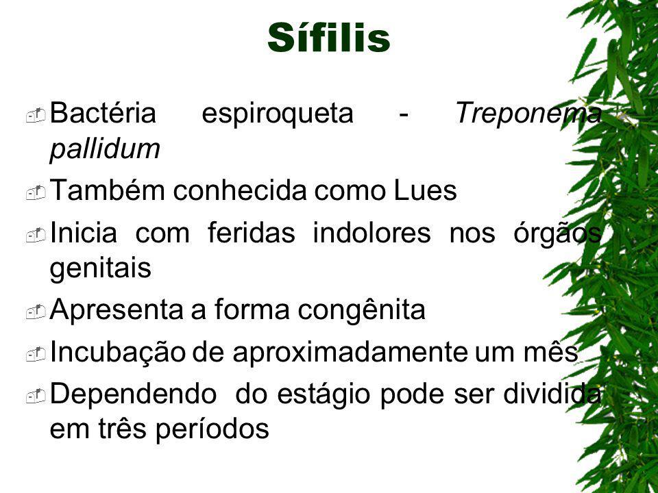Sífilis Bactéria espiroqueta - Treponema pallidum