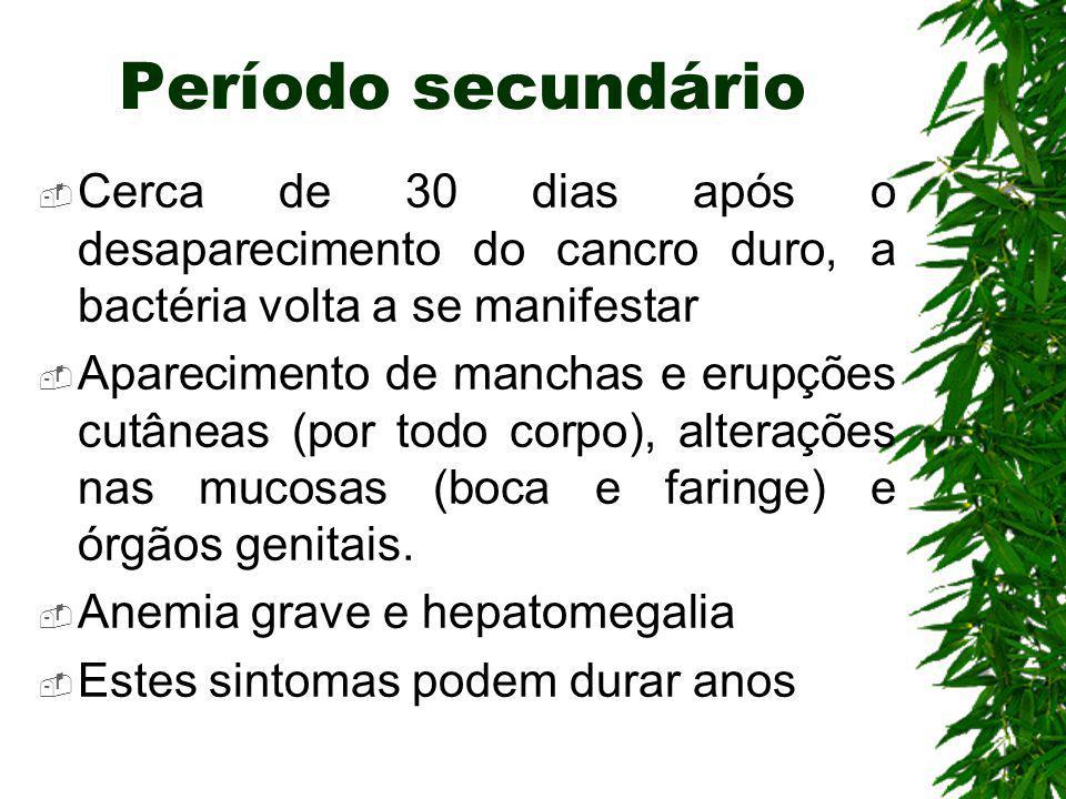 Período secundário Cerca de 30 dias após o desaparecimento do cancro duro, a bactéria volta a se manifestar.